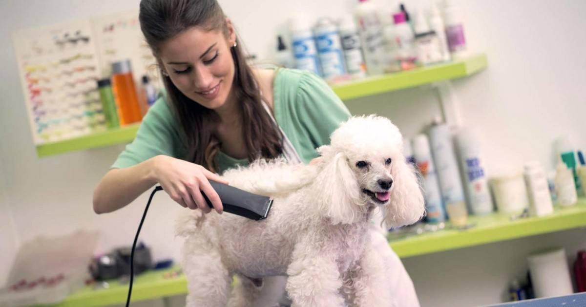 Comment faire pour bien choisir sa tondeuse pour chien