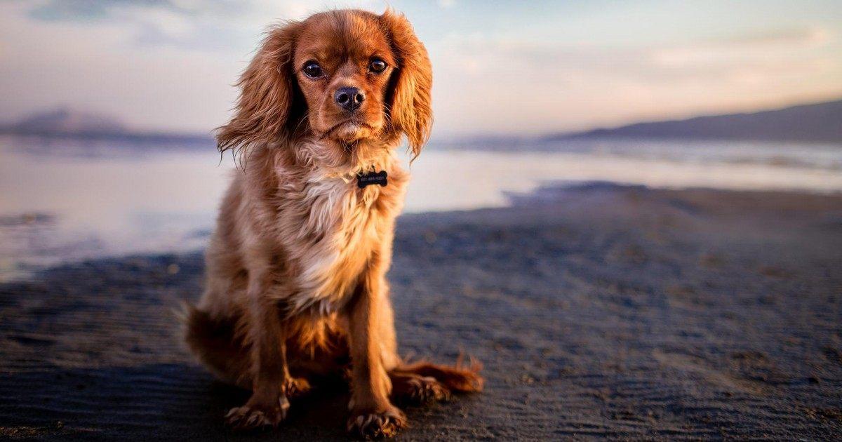 Comment faire pour choisir une tondeuse pour chien correctement