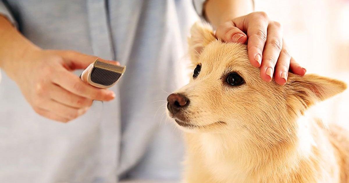 Tondeuse professionnelle pour chien et chat TOPELEK