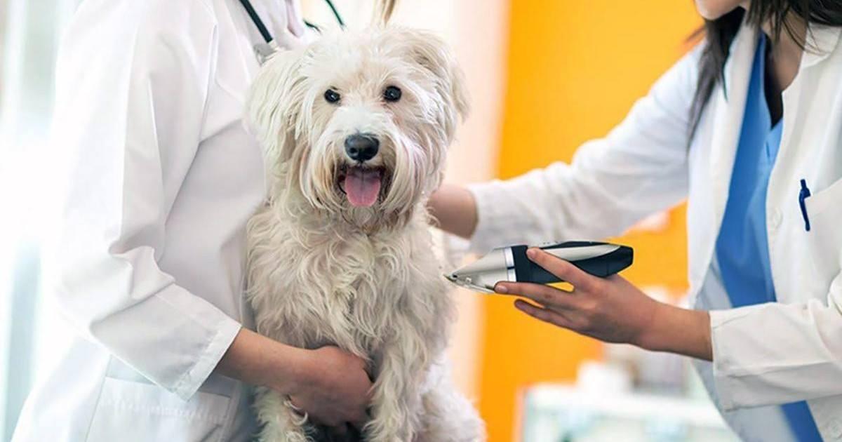 Tondeuse professionnelle pour chien OMORC
