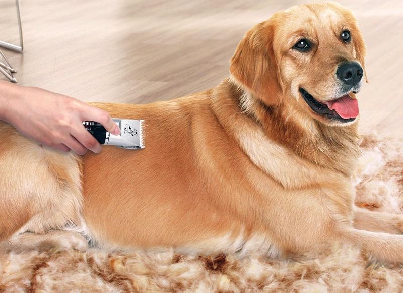 Tondeuse pour chien professionnelle