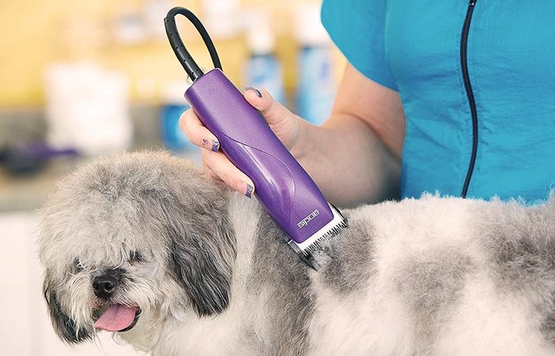 Tondeuse pour chien à fil
