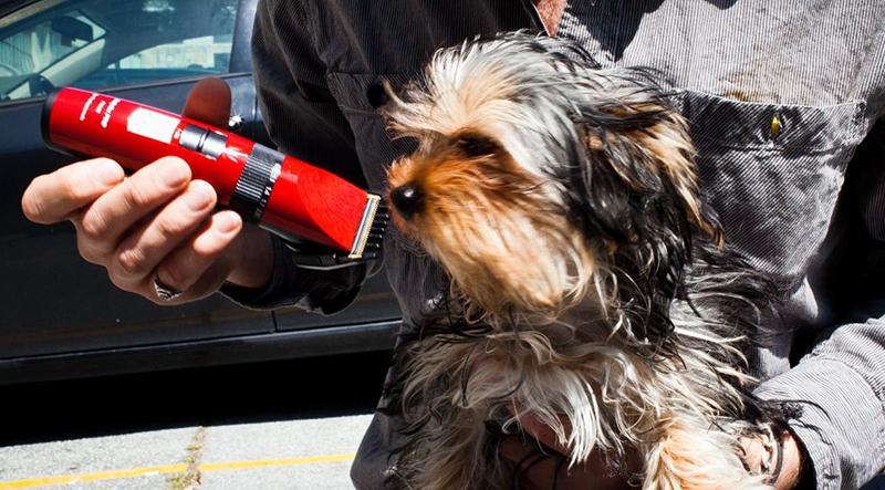 Tondeuse pour chien sans fils