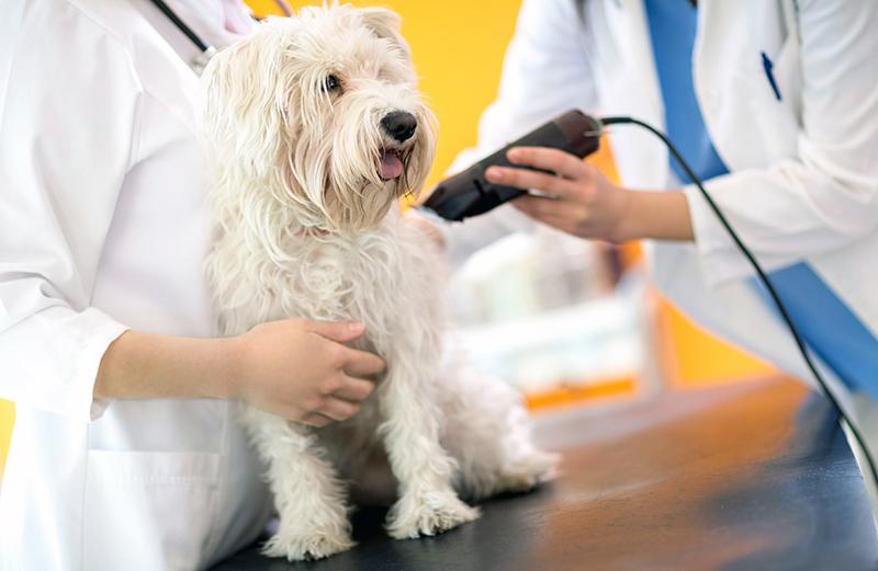 Bien choisir sa tondeuse pour chien